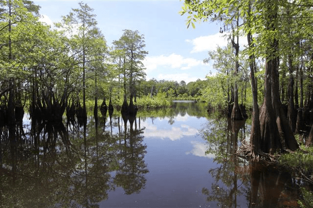 image of Wewahitchka swamplands, use the following link to learn more area information
